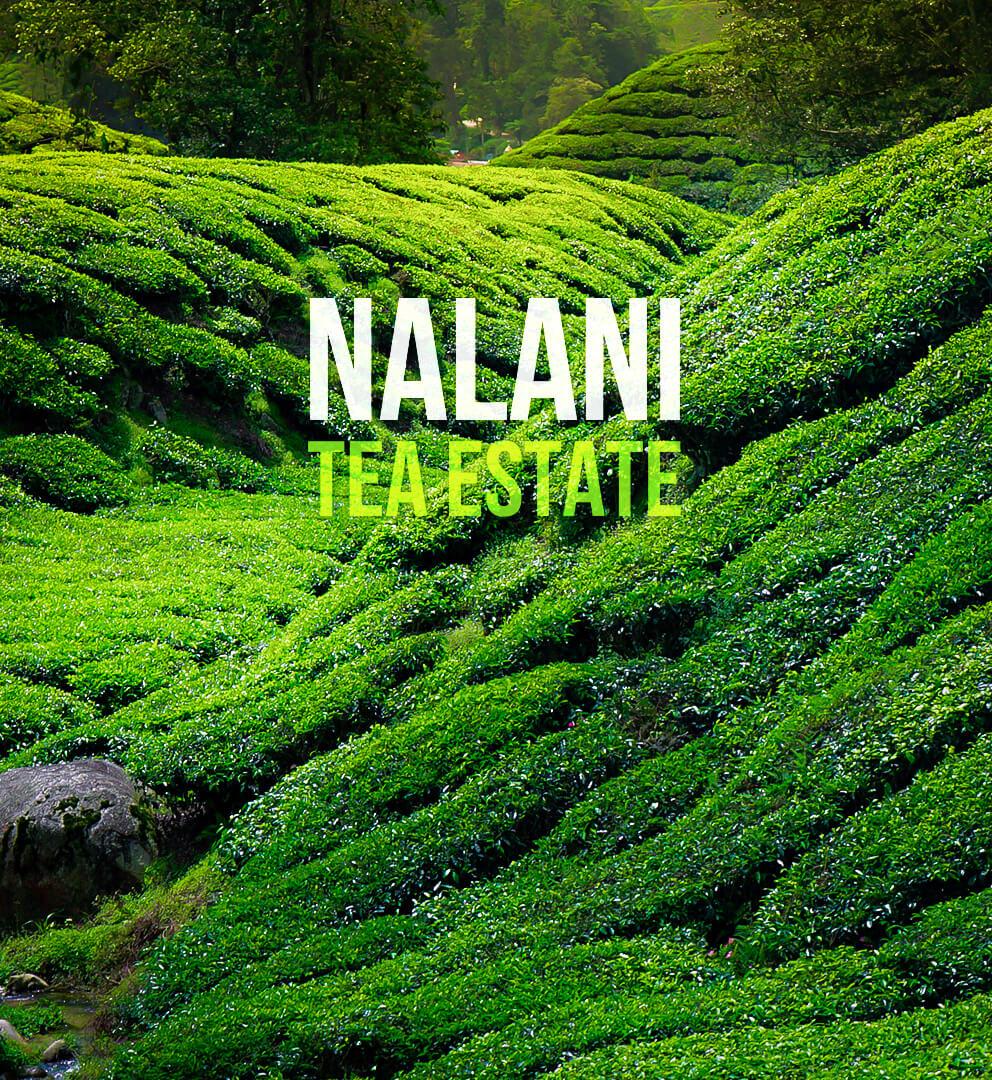 Nalani - Jokai Tea